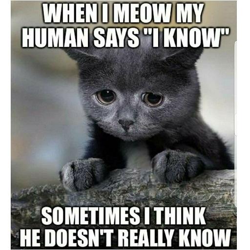 cat-meme-39.jpg