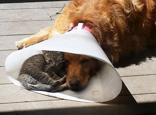 dog and cat2.jpg
