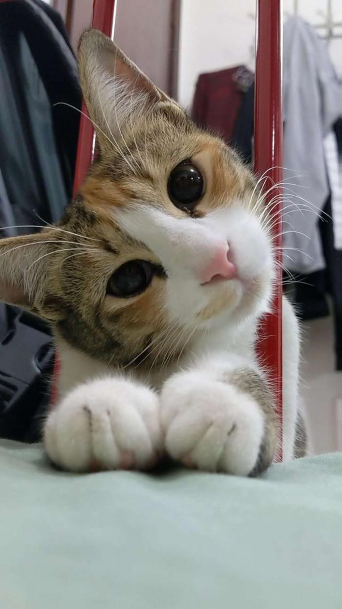 kitty dad.jpg